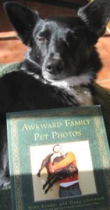 Dog Book Review and Giveaway: Awkward Family Pet Photos