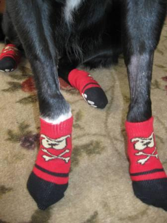 best dog blog, champion of my heart, border collie wearing PAWKs from RC Pet Products