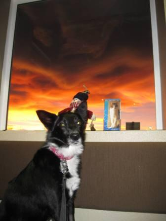 best dog blog champion of my heart border collie in front of crazy sunset
