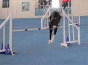 Never Mind – A Tale of Dog Agility Woe