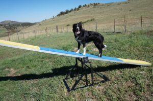 Teeter-Totter Training Update – Dog Agility