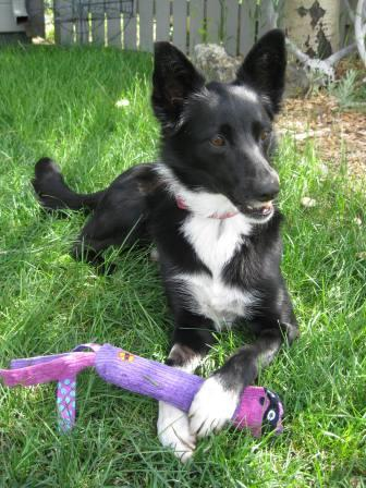 best dog blog champion of my heart dog toy review
