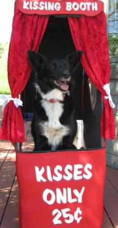 kissing booth dog champion of my heart best dog blog