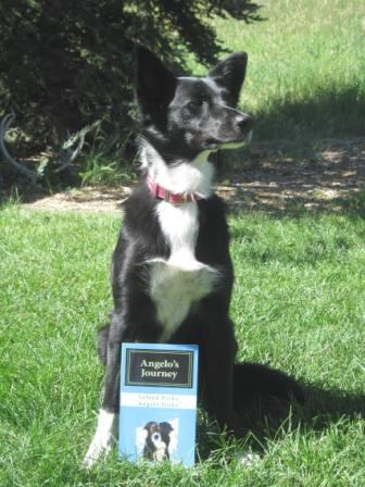 best dog blog, champion of my heart, dog book review