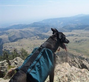 best dog blog, champion of my heart, lab mix dog wearing backpack and overlooking mountain valley
