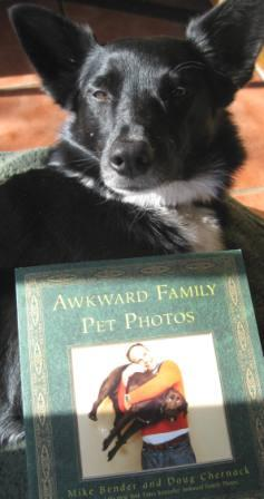 best dog blog, champion of my heart, border collie with copy of awkward family pet photos