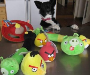 best dog blog, champion of my heart, border collie with angry birds dog toys