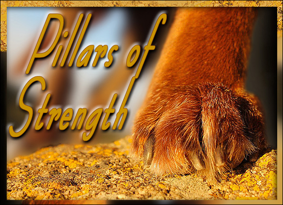 best dog blog, champion of my heart, pillars of strength graphic