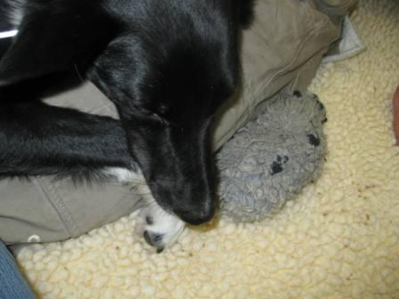 best dog blog, champion of my heart, Lilly with her favorite dog toy