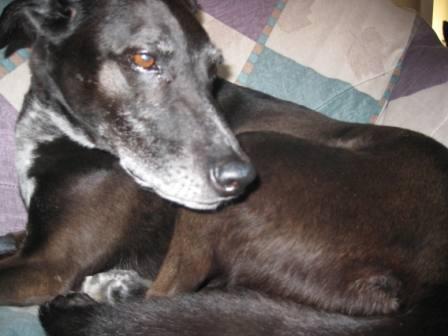 best dog blog, champion of my heart, ginko after dental