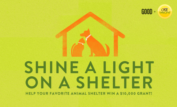 best dog blog, champion of my heart, shine a light on a shelter graphic