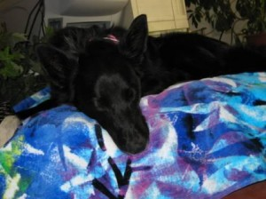 Dog Product Review: Pet Dreams Memory Foam Dog Bed
