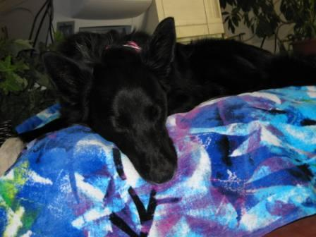 best dog blog, champion of my heart, memory foam bed from pet dreams