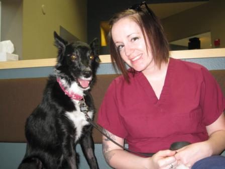 best dog blog, champion of my heart, border collie with veterinary techncian