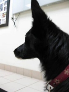 Lilly News: Veterinary Neurology Recheck