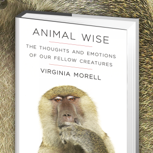 best dog blog, champion of my heart, book cover Animal Wise by Virginia Morell