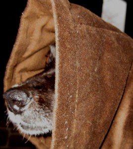 border collie dressed as jedi