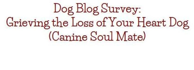 dog blog champion of my heart dog grief survey graphic