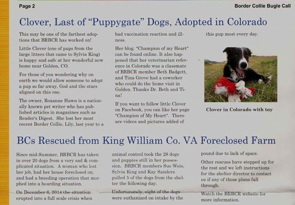 BRBCR article, puppygate, hoarding, border collie puppies running