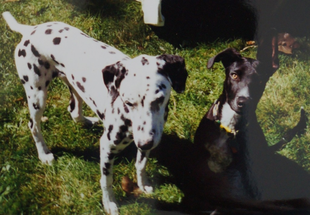 penelope and ginko in backyard 2000