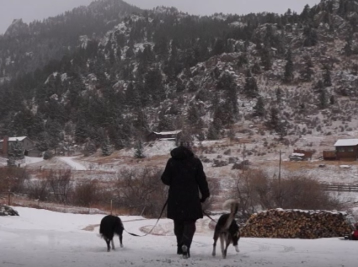 loose leash boot camp for dogs