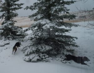puppies running in the snow