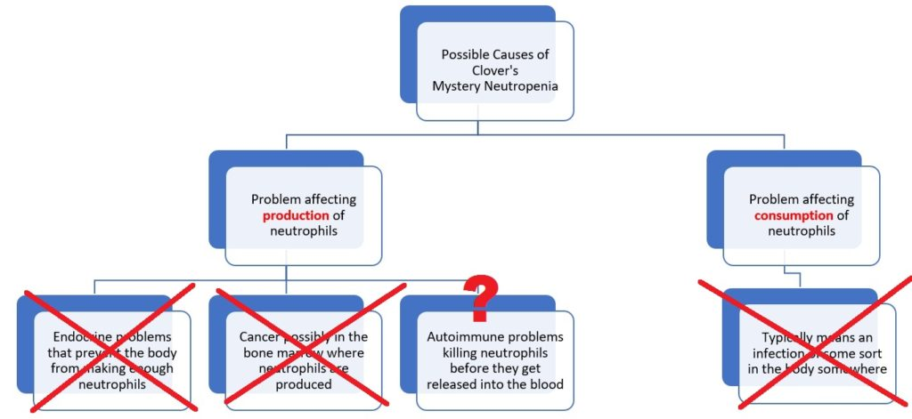 neutropenia in dogs flow chart graphic