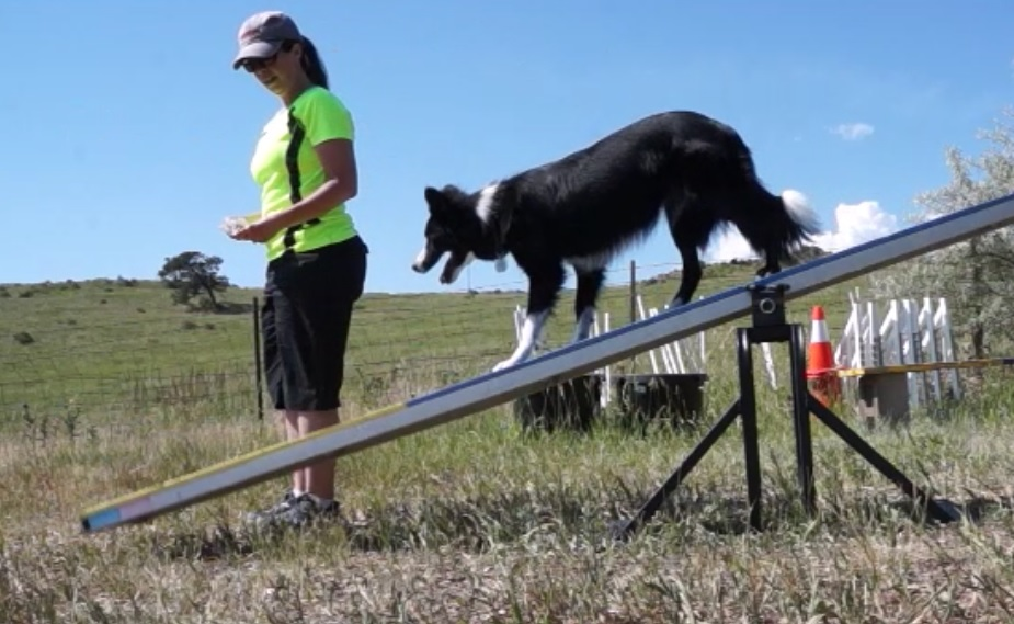 agility teeter-totter training