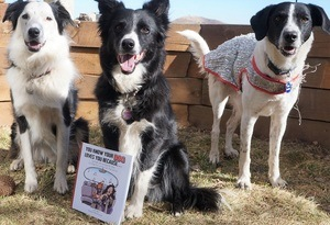 book review you know your dog loves you because photo of the 3 pups posing with the book